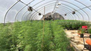 U.S. Senator wants to address the 'Glitches' in the Farm Bill's Hemp Legalization