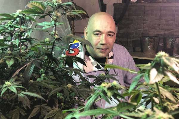 The Legislation of Medicinal Cannabis Advances in Illinois