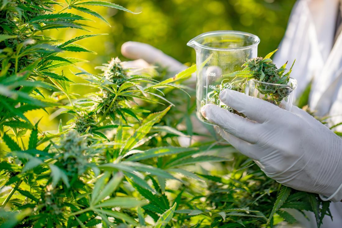 CBD, Cannabis and Epilepsy: Medical Cannabis to Treat Epilepsy and Seizures