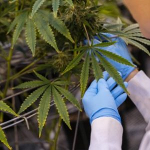 Cannabis ETF: An Upcoming Way to Benefit from the Ever-Growing Marijuana Markets