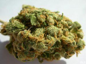 10 Best Marijuana Strains for Back Pain