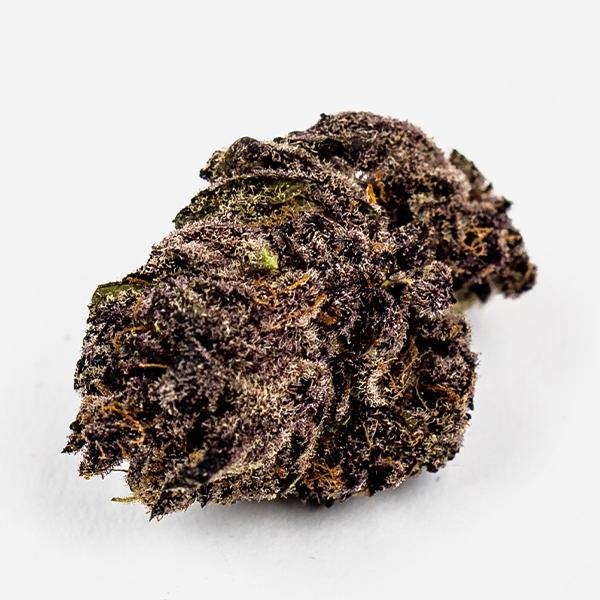 A dark purple, robust bud of the Tropicana Cookies cannabis strain.