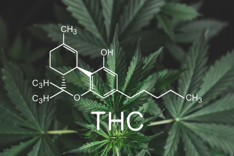 THC percentage